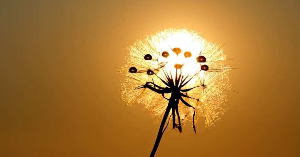 Dandelion in the sun – How to Align Sales and Marketing to Drive Conversions